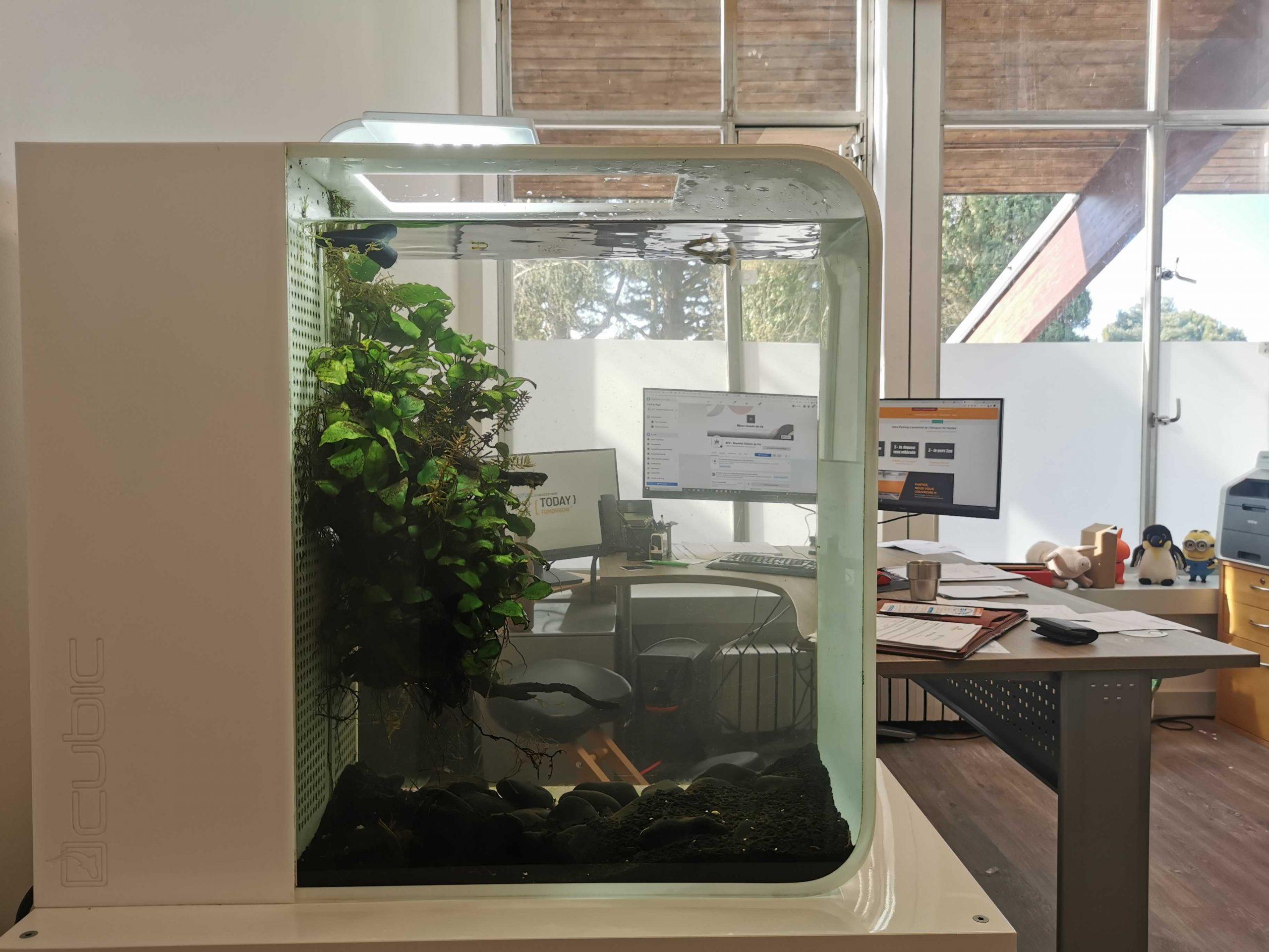 Aquarium, bureau