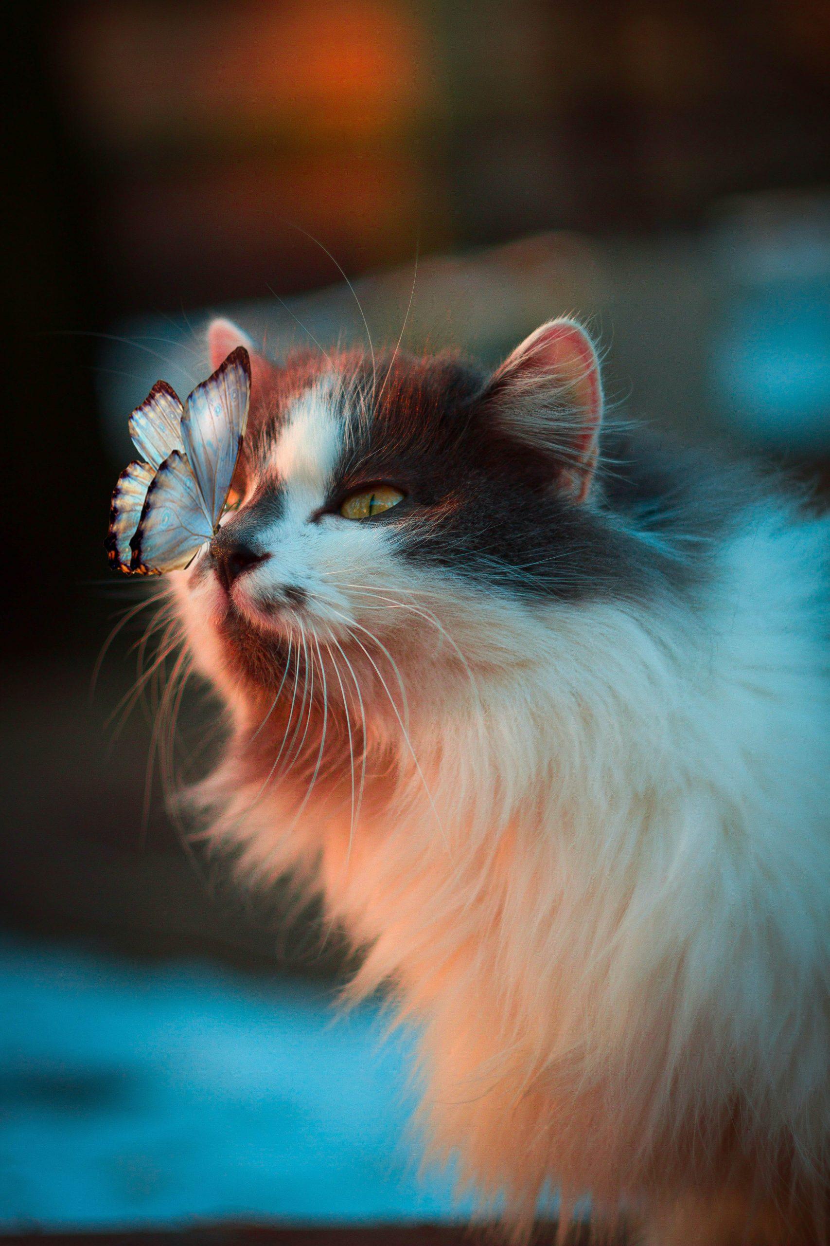 Chat, papillon
